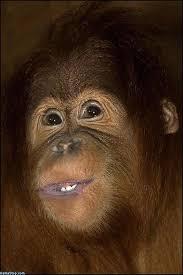monkey smile.jpg