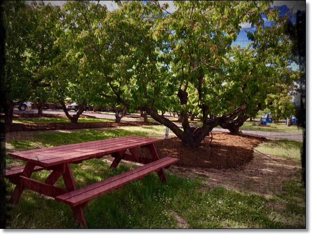 orchard bench edit