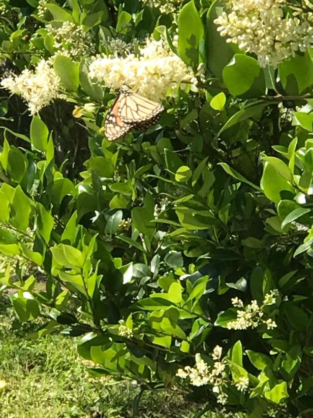 butterfly fun