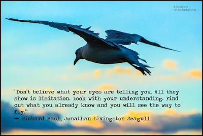 Coolest Jonathan Livingston Seagull Quotes If You Love Someone urban simplicity